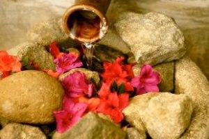 Steph flowers in rocks